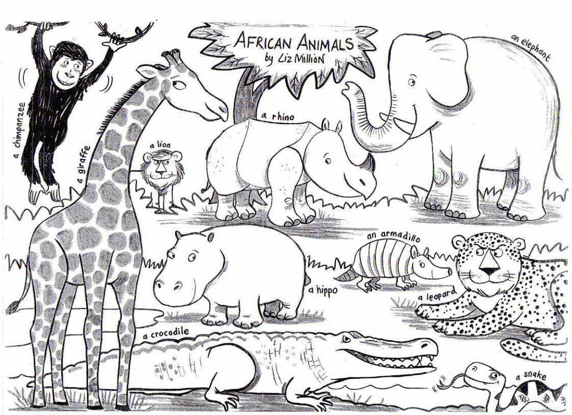 African Animals Liz Million  author and illustrator of